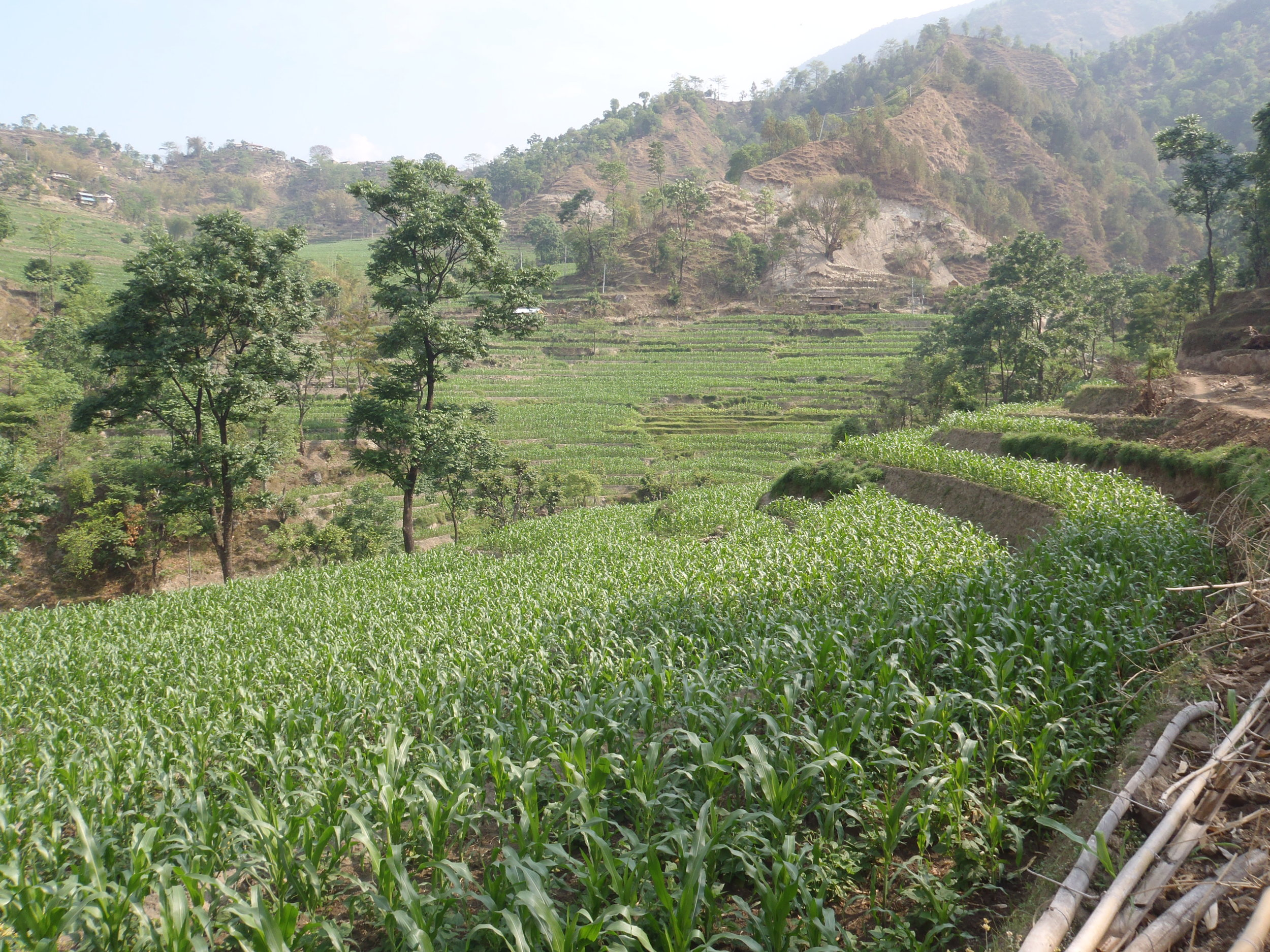 The start of the Annapurna Circuit is very green and very hot!