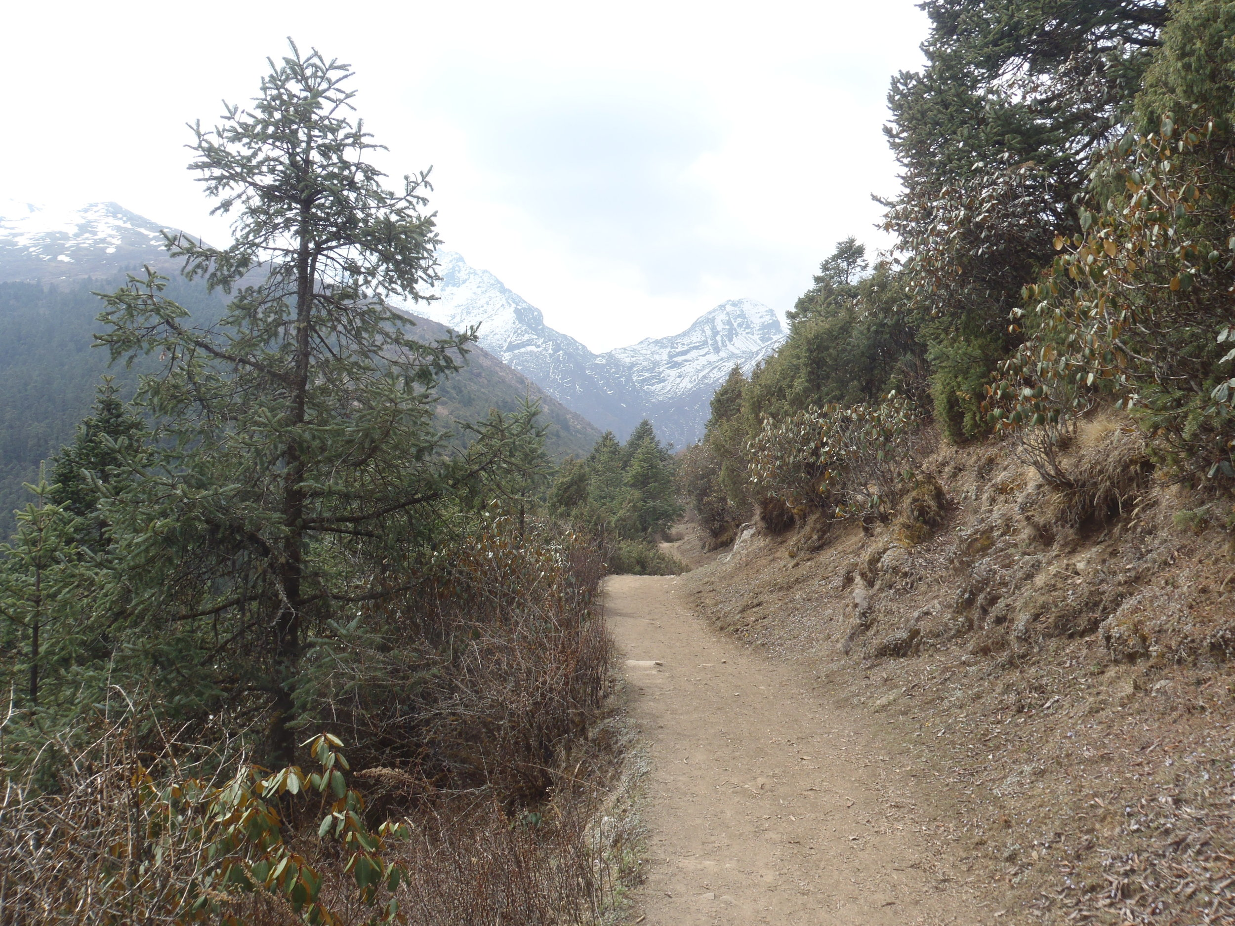 The trail to the mountains.