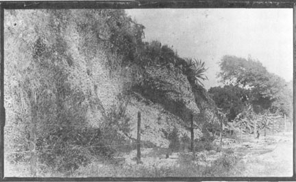 Photo courtesy of Sebastian Area Historical Society   Barker's Bluff was one of the largest midden mounds in this part of Florida.