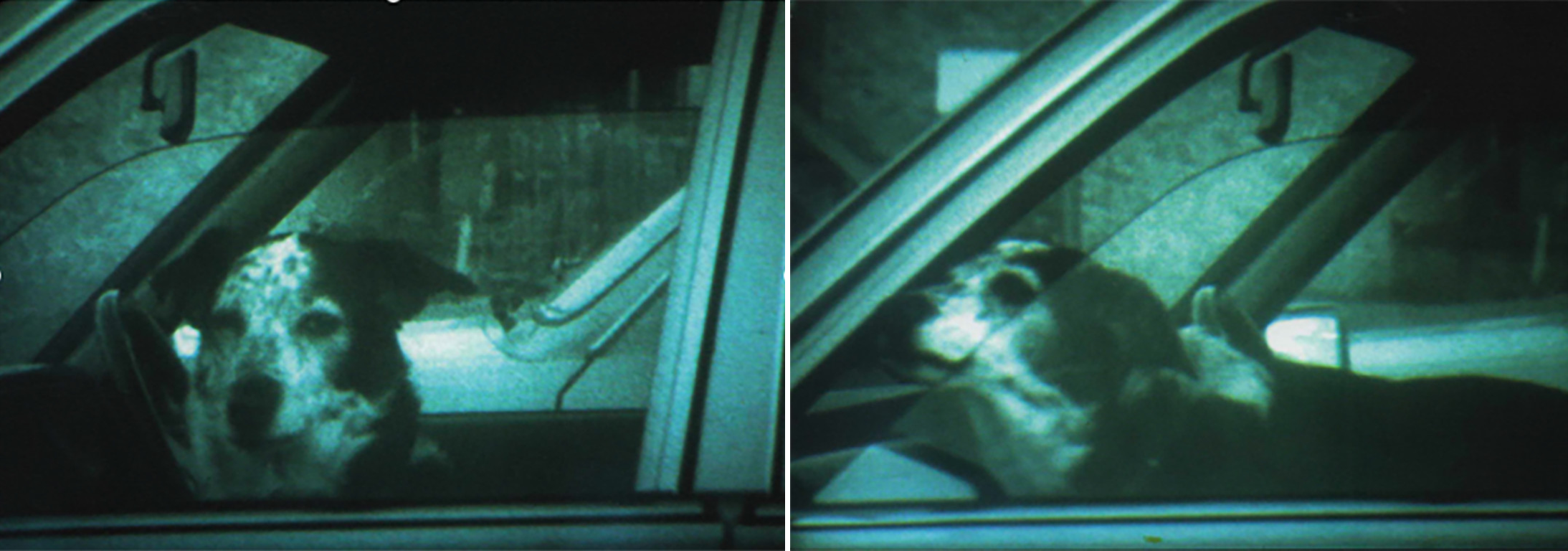 dogs in cars, waiting.png
