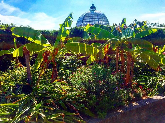 Going bananas in the Big Easy at the New Orleans Botanical Garden this week.🍌🍌🍌#travel #garden #landscaping #landscape #nature #green #plants #explore #instagood #instamood #bigeasy #nola #horticulture #botanical #landscapephotography #theoutbound #workhard #playhard #view #instadaily #trip #weekend #southern #bananas #botanicalgardens #tour #friday #friyay #tgif #inspiration