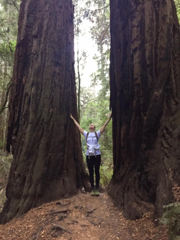 california coast redwoods 2.jpg