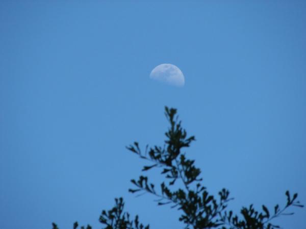 daytime moon.jpg