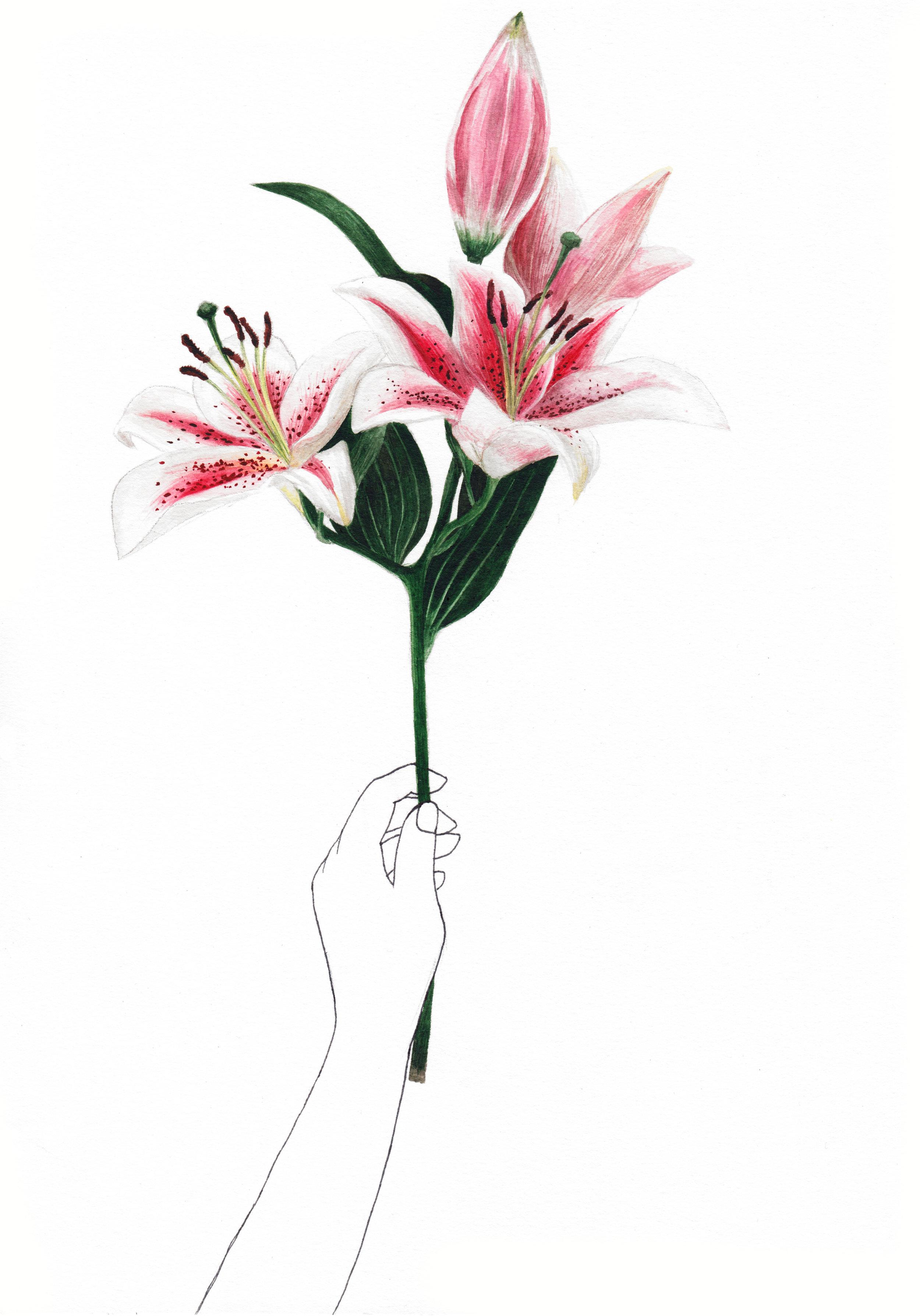 lilies white.jpg