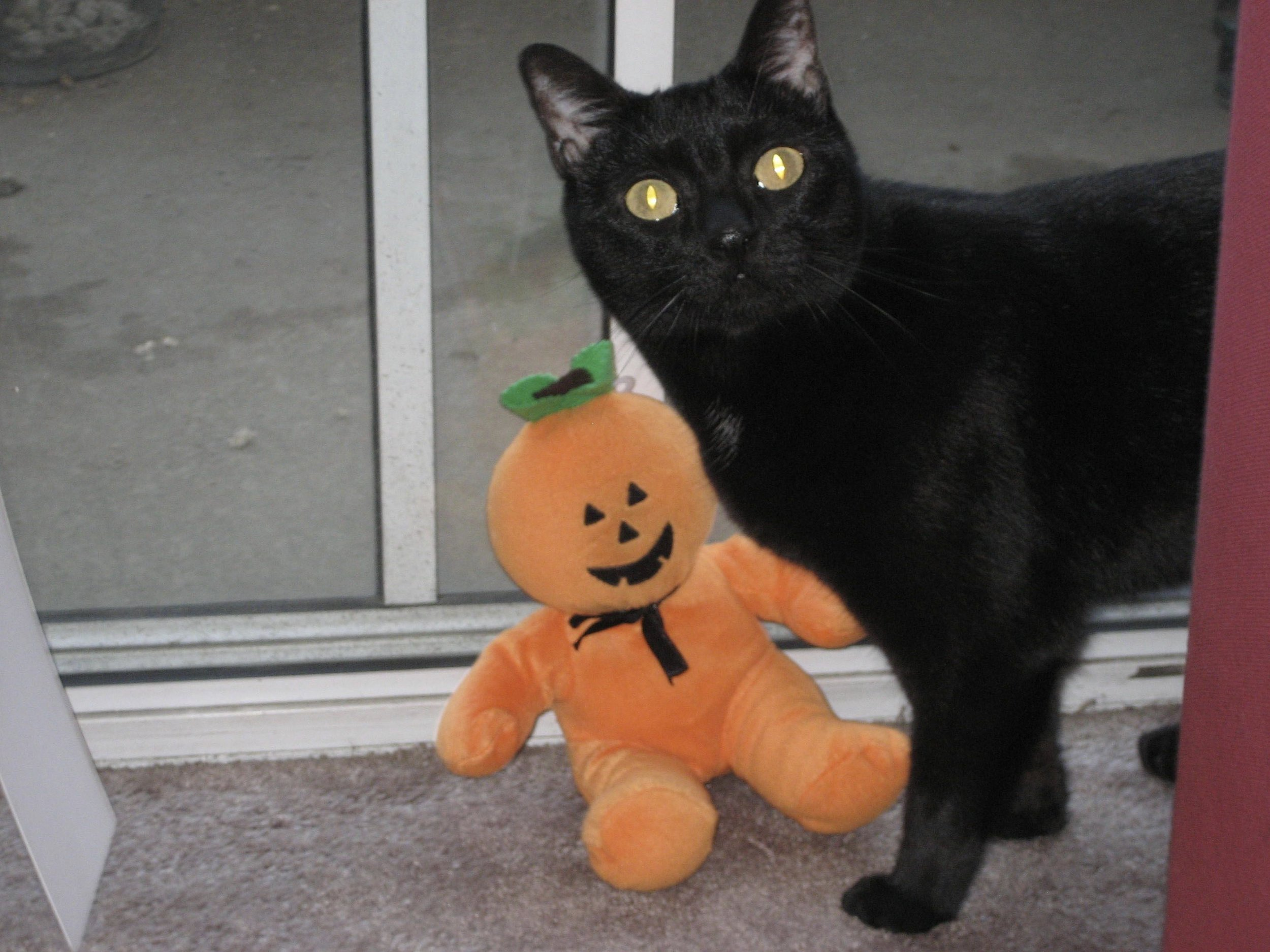 Jeffrey's daughter, the gorgeous Kittan Reddick and a toy pumpkin.