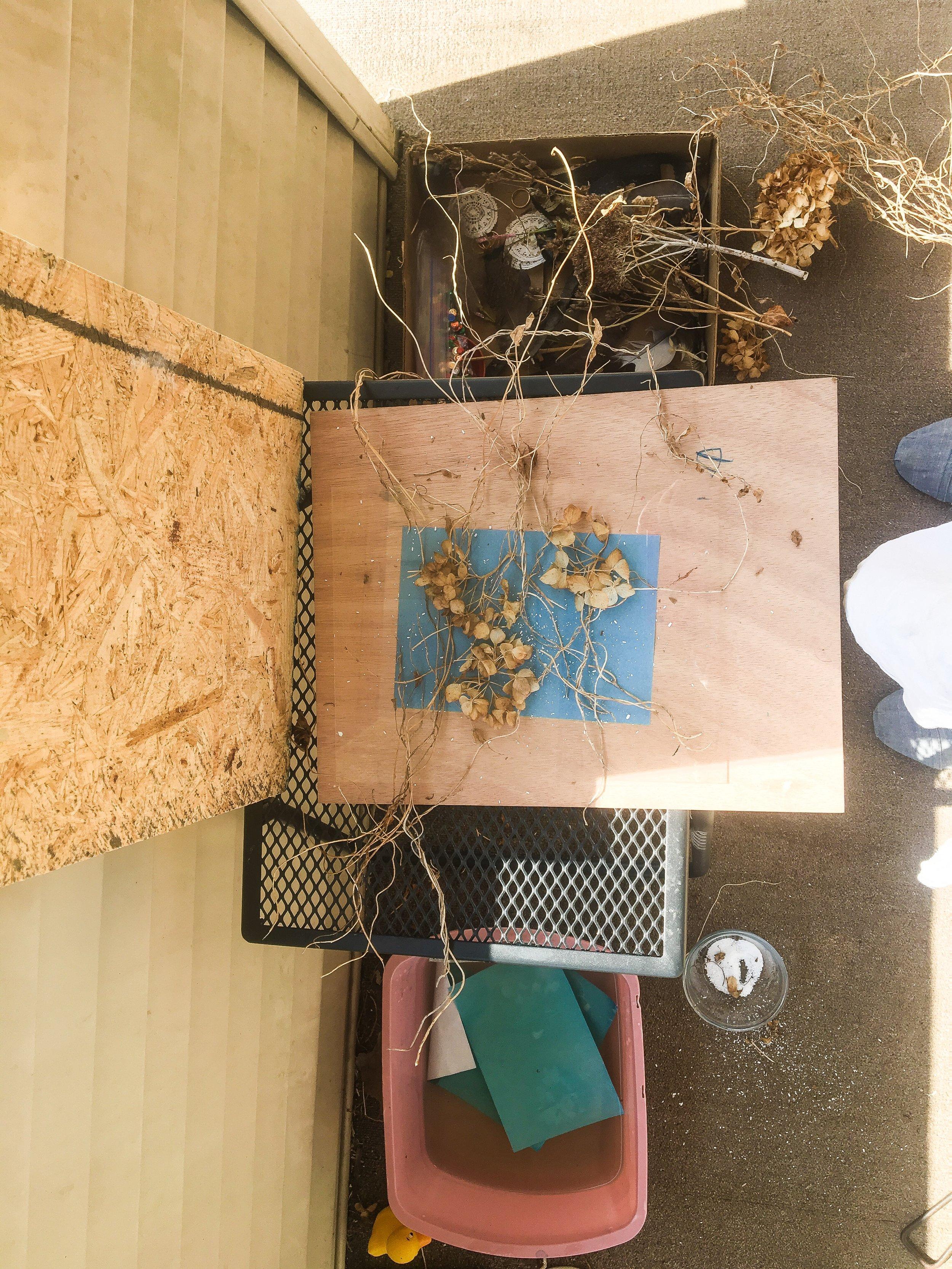 Outdoor studio || Omaha, NE || Rachel Loewens