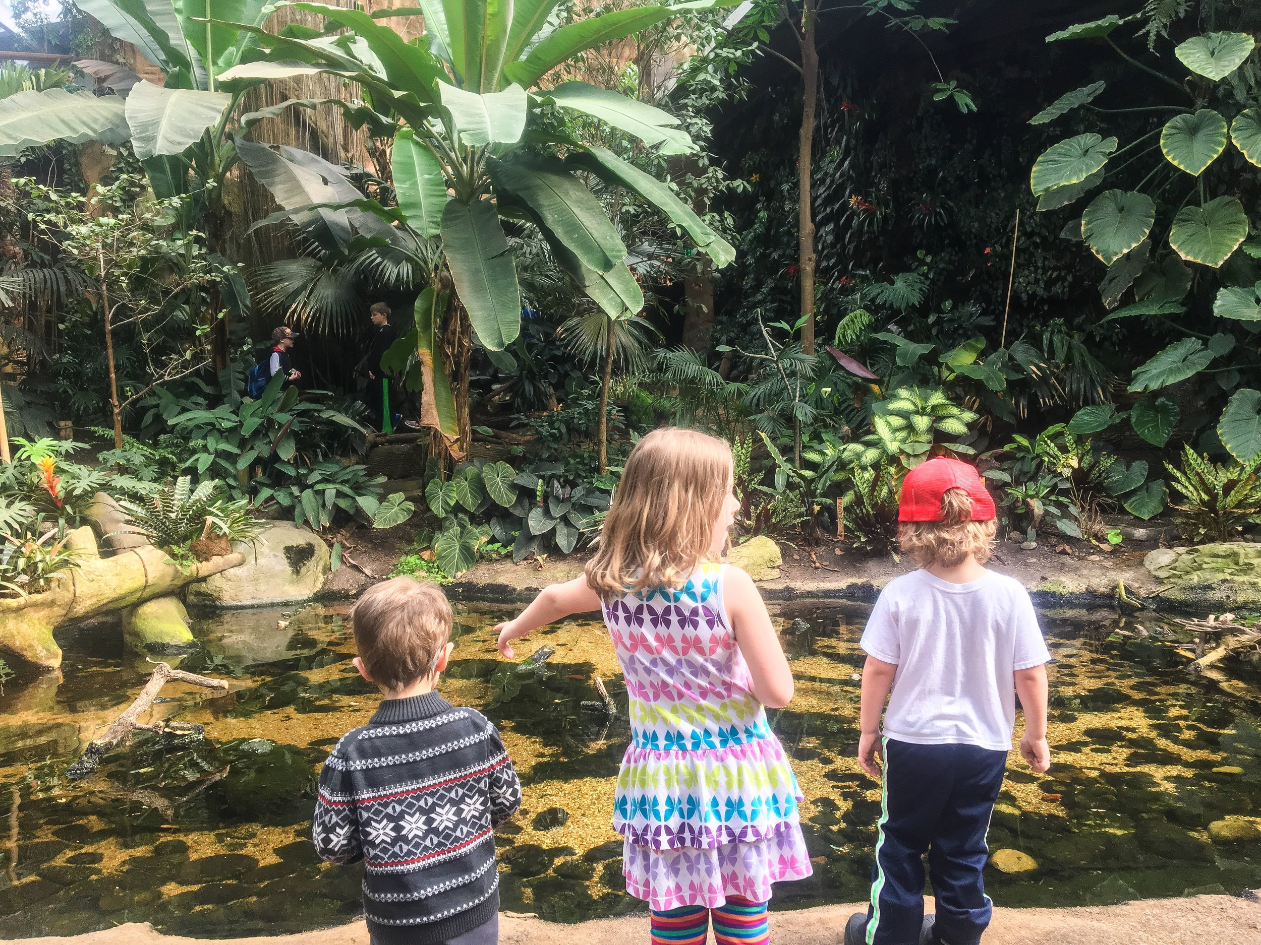 Trip to the zoo    Omaha, NE    Rachel Loewens