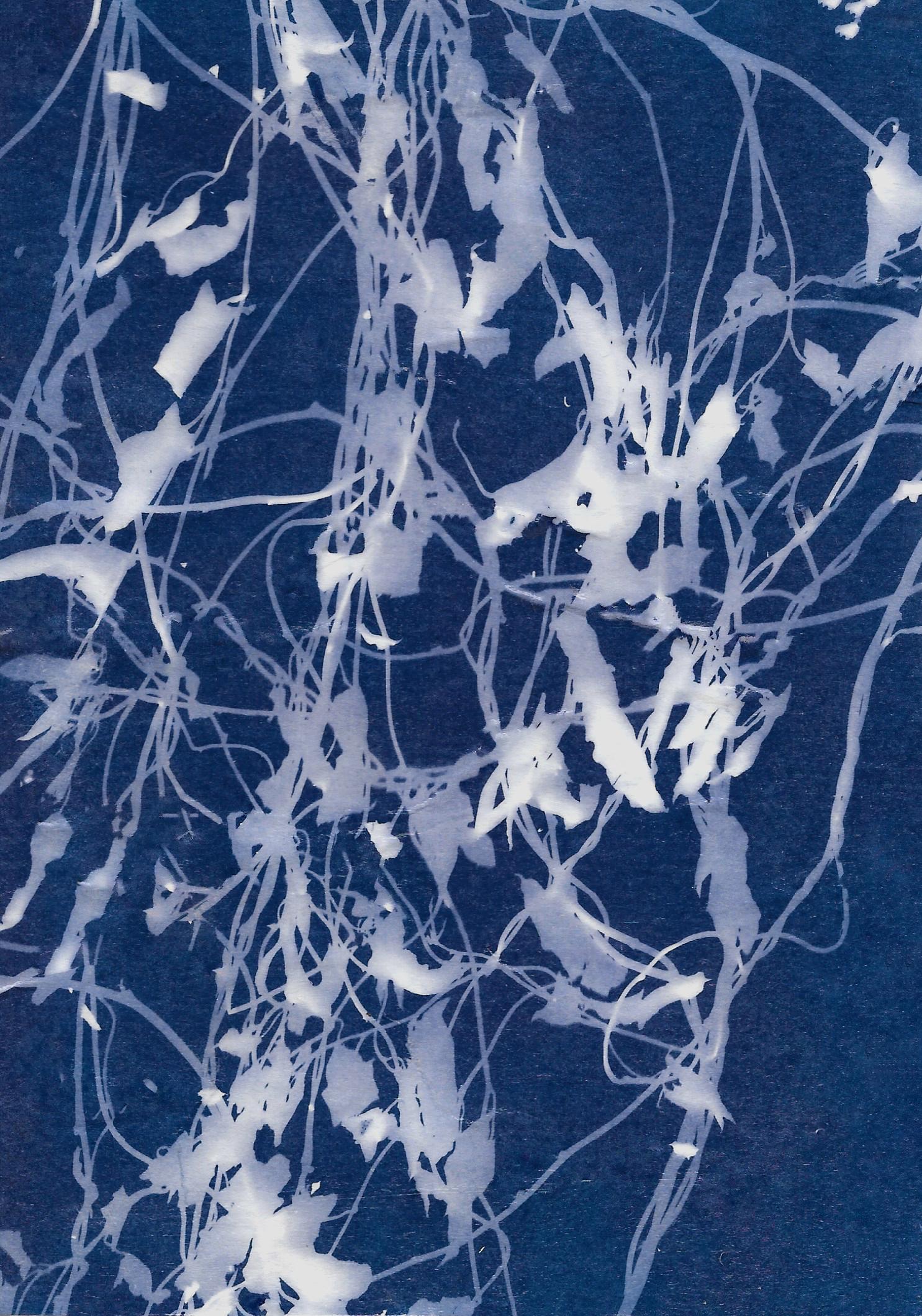 Winter Garden 1 || cyanotype || Rachel Loewens