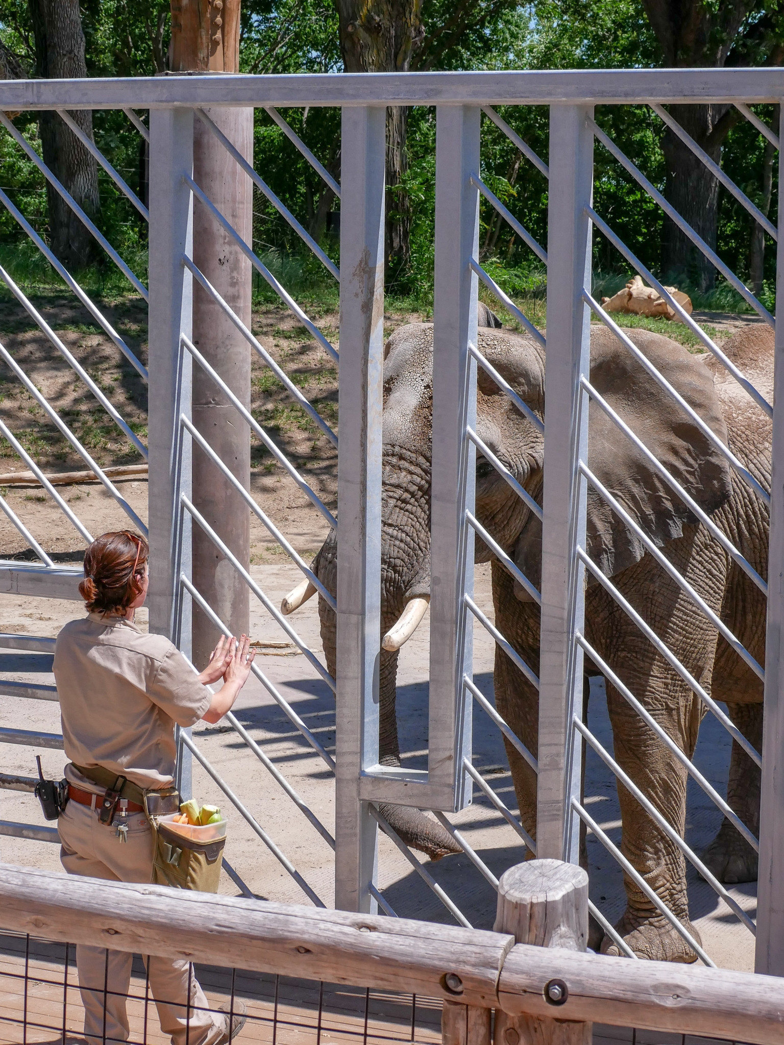 Elephant training || Henry Doorly Zoo || Rachel Loewens Studios