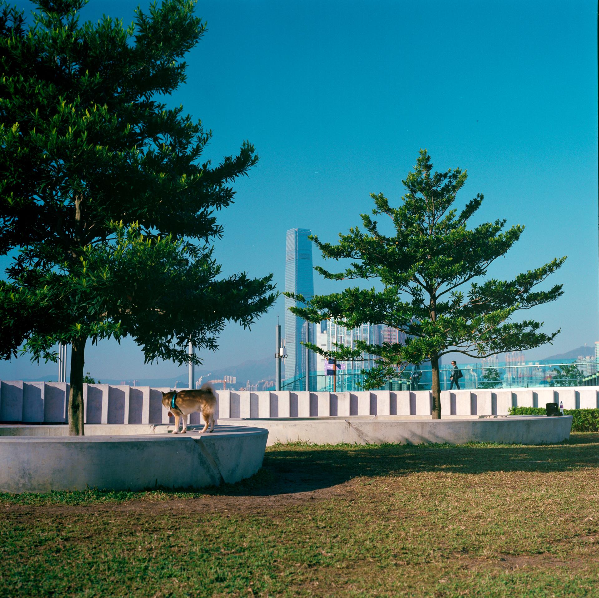 Central Promenade