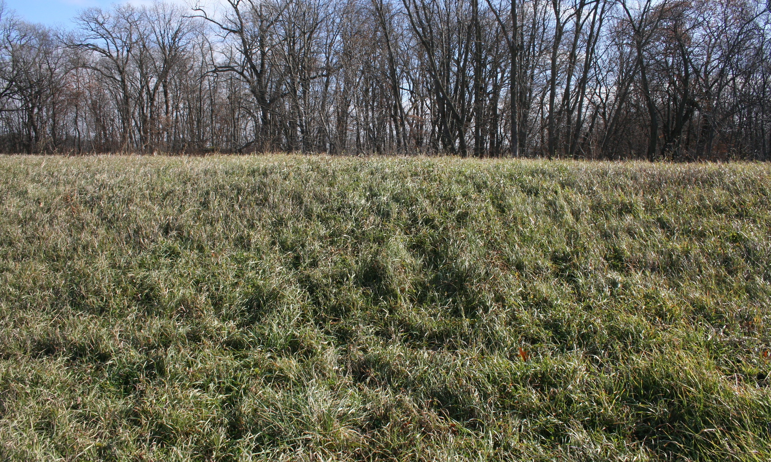 This berm used to be part of a large ravine where soil and sediment would wash out during heavy rains. To prevent this from happening and keep his soil and nutrients on his field, this farmer built a berm with a tile inlet at the bottom.