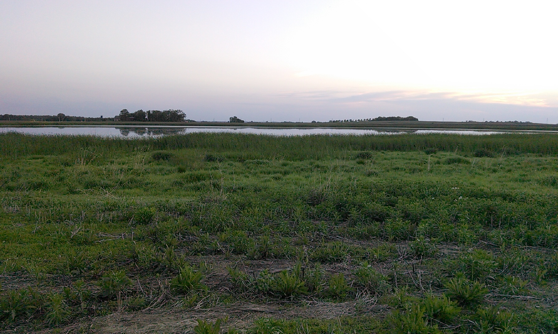 This wetland was restored by neighboring farmers near Mankato. It covers nearly 50 acres.