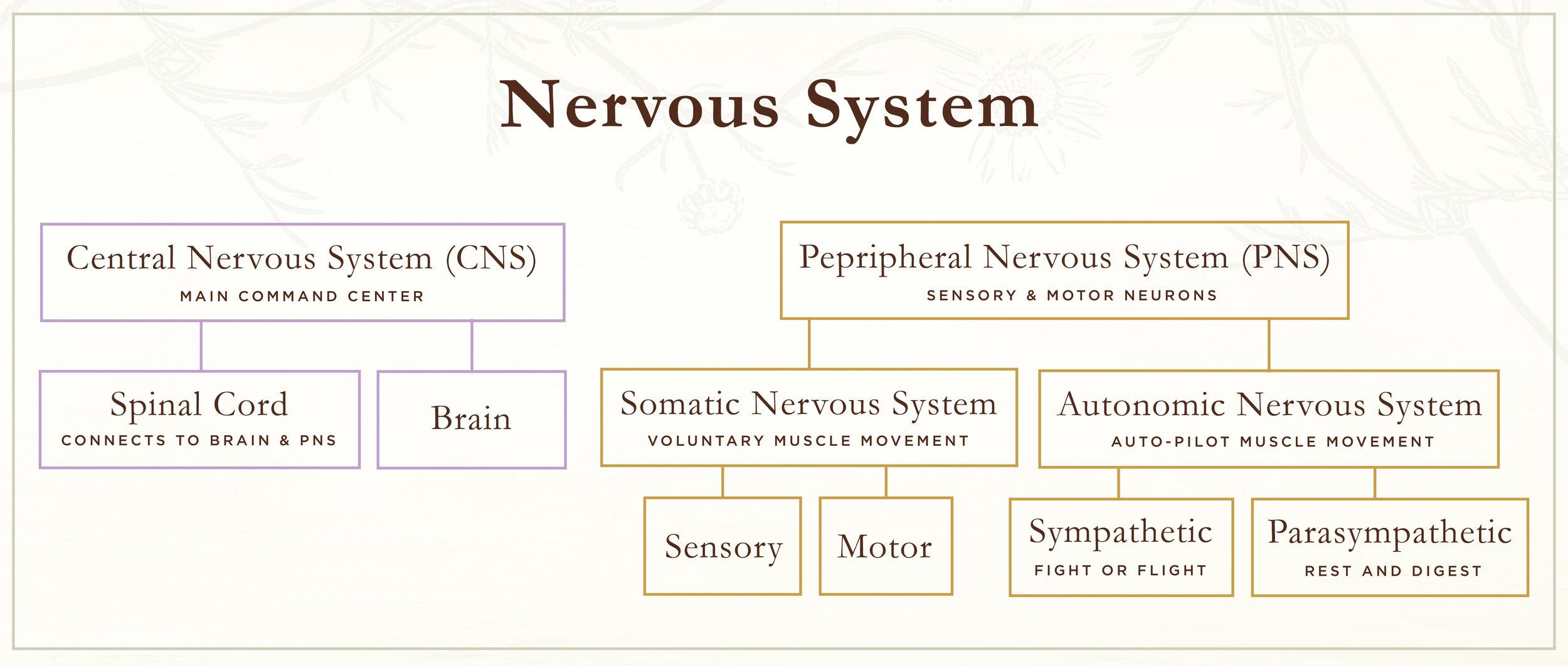 TRM_NervousSystem_042117_HAB01.jpg