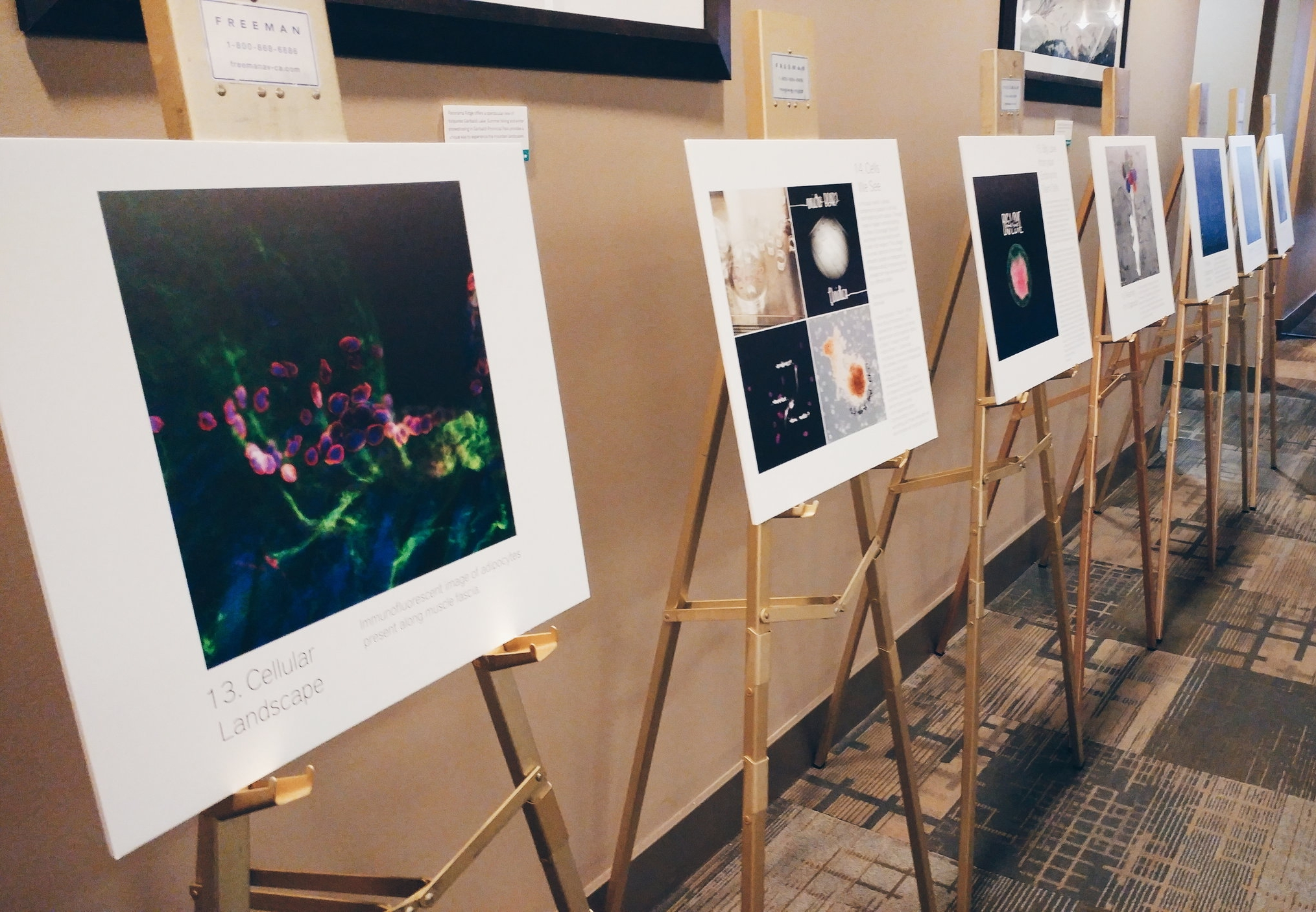 Multiple filters for stem cell research at Canadian stem cell conference. - Guest blog post for The Niche, renowned stem cell blog by scientist Dr. Paul Knoepfler.