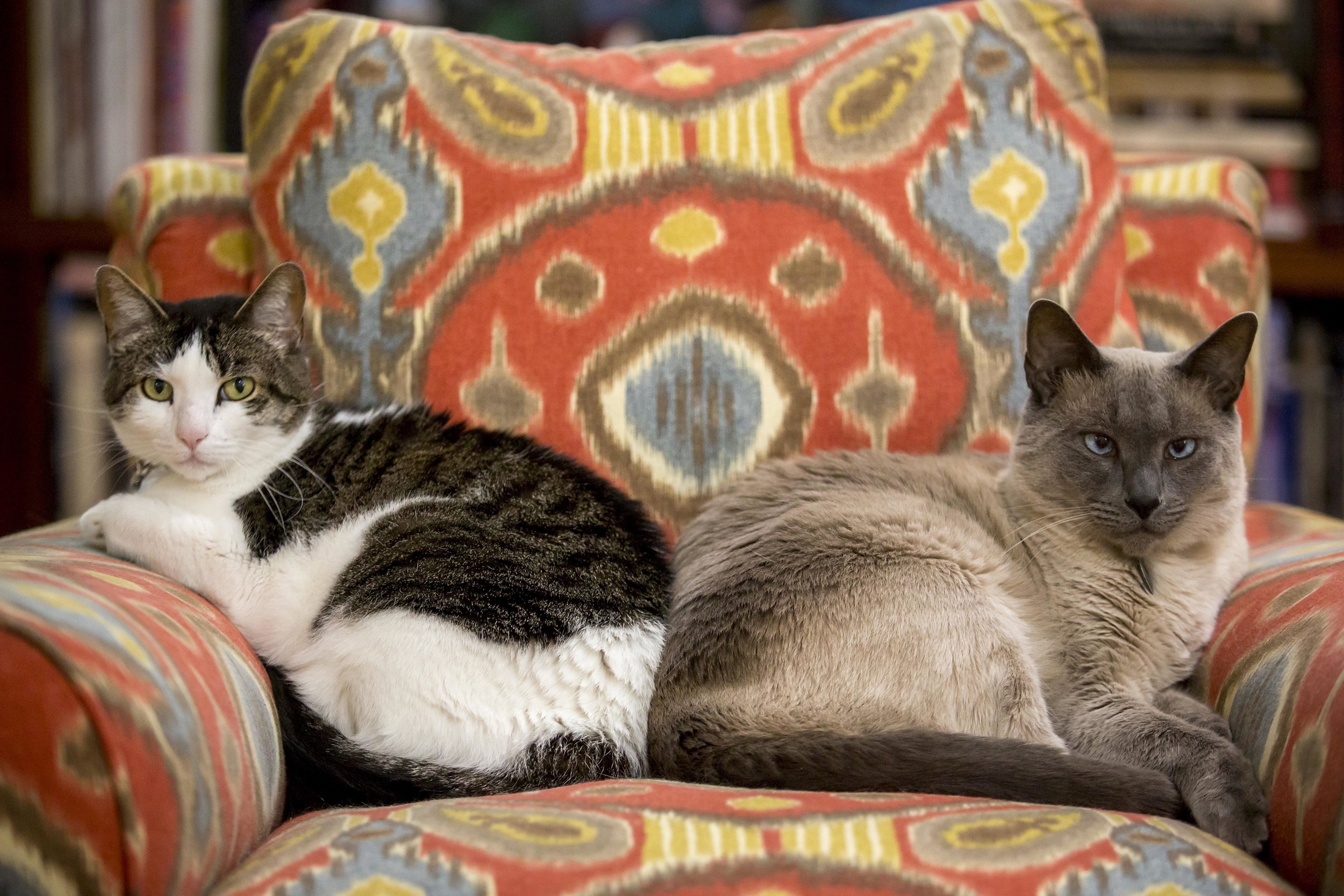 Sadie (left) and Mojo in a rare moment of peaceful cohabitation. @2107 copyright  Smiley N. Pool, photographer
