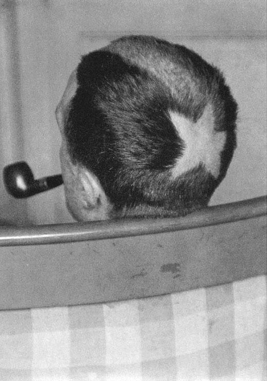 1919, ManRay, Tonsure de Duchamp.jpg