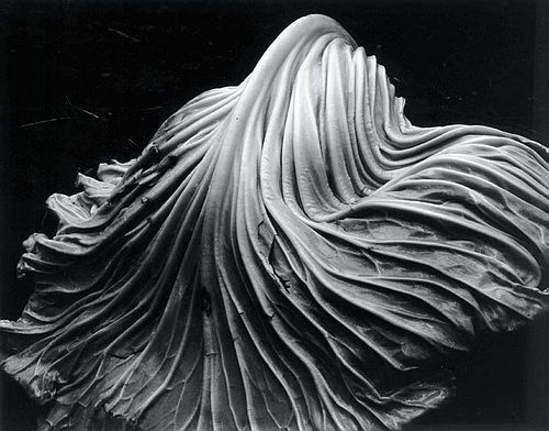 1931, Edward Weston, Leaf.jpg