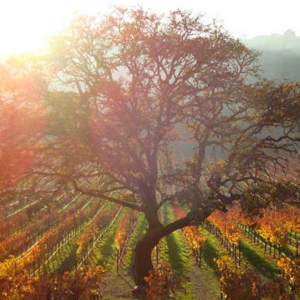 Greedy Winery Sonoma Sebastopol