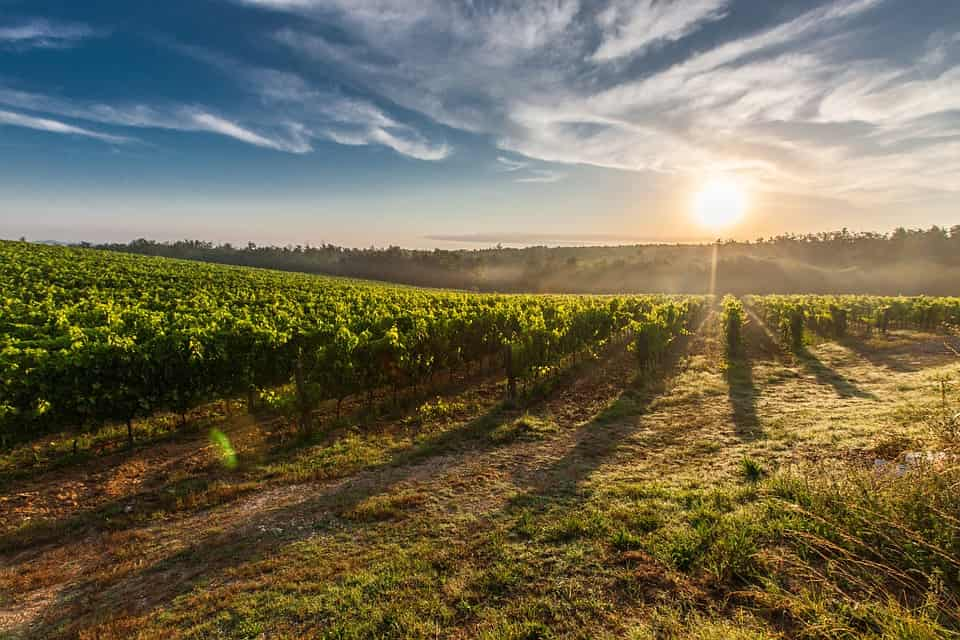 Baltimore Wine Country Tours
