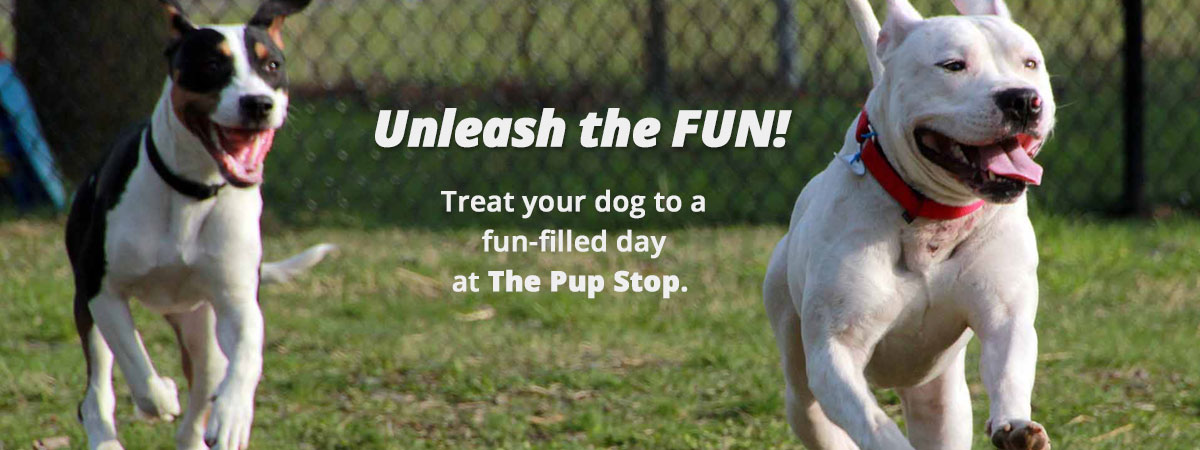 The_Pup_Stop_Banner_2_index_page.jpg