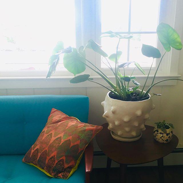 Bumpy planter vibes from Saugerties 🌱 📸 @marciepaper