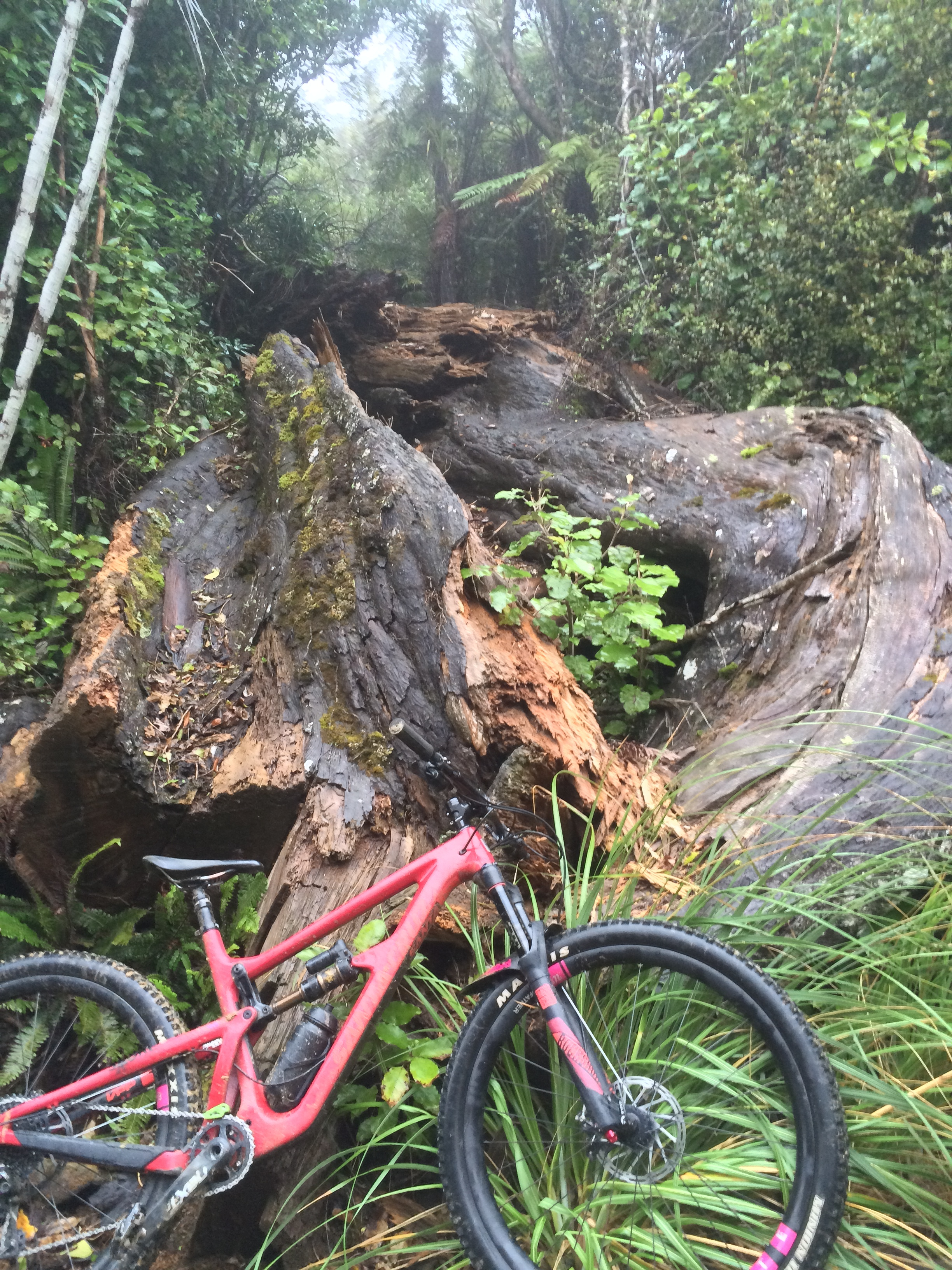 That was one massive tree
