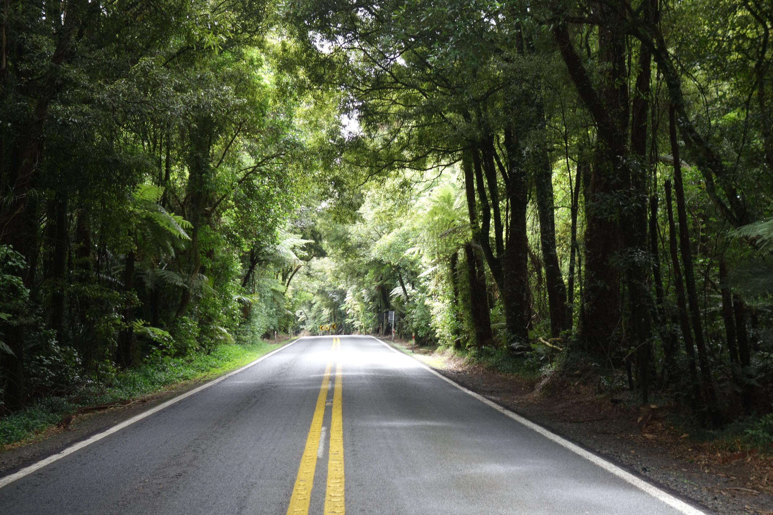 On the road to Rotorua.