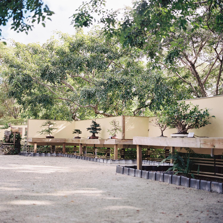 bonsaigarden.jpg