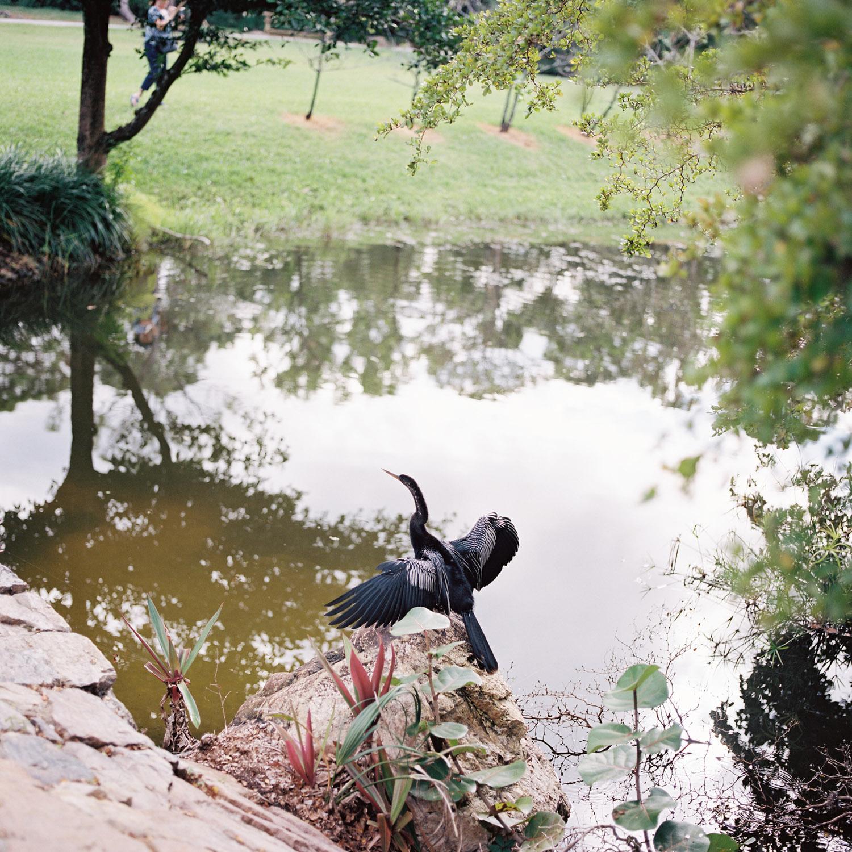 morkamibird.jpg