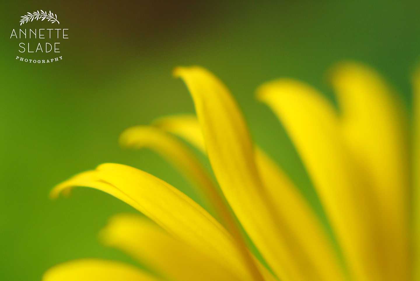 Slade Photo - Yellow Petals.jpg