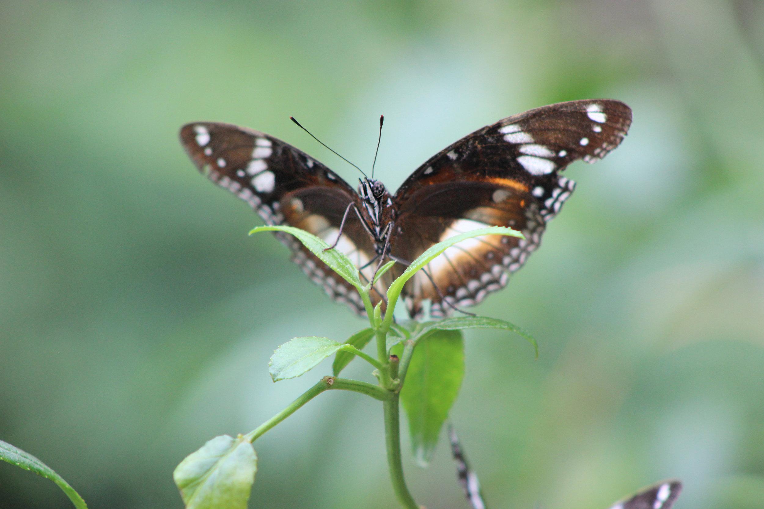 Butterfly_MelbZoo18_JessicaJaneRule.jpg