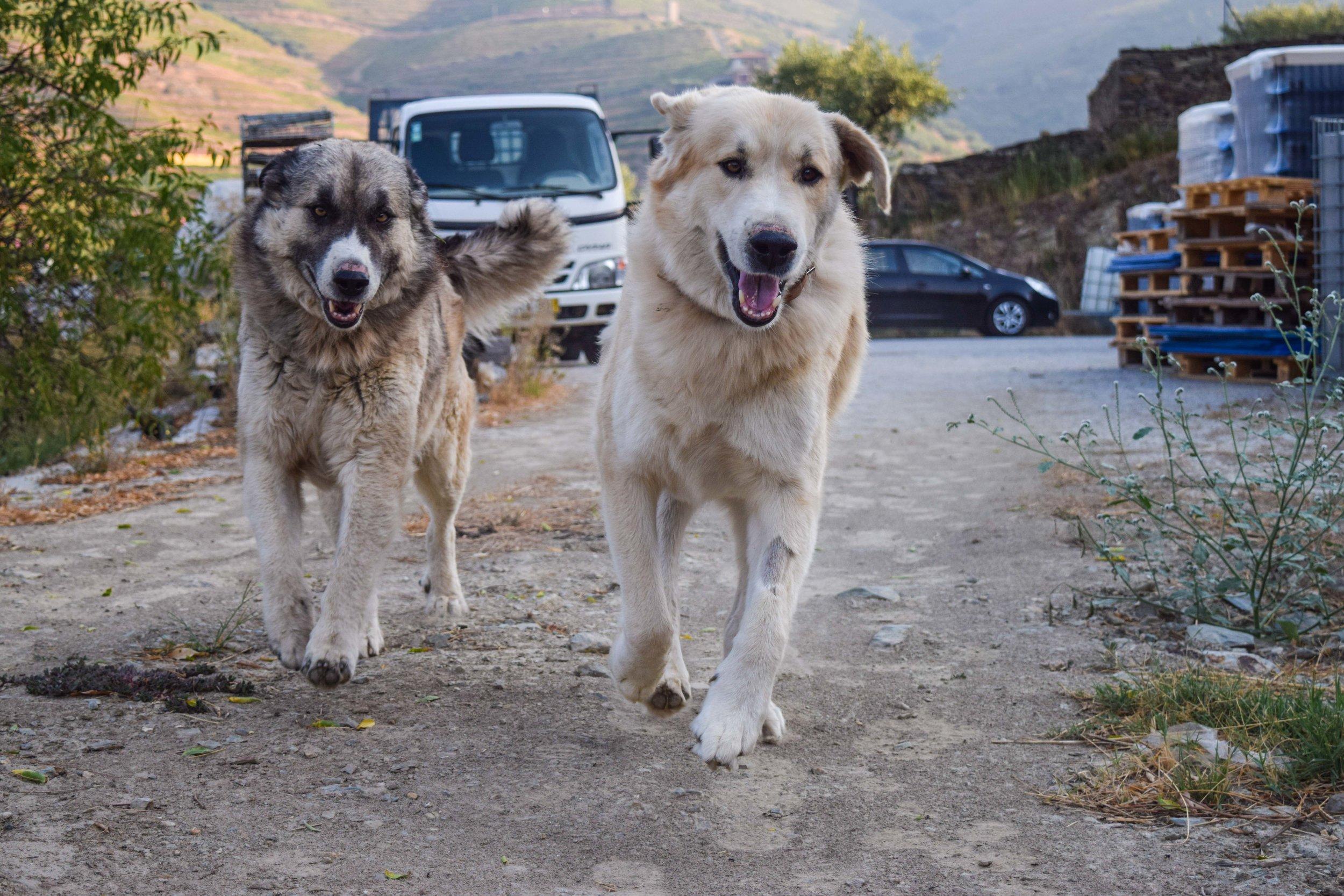 Nos chiens font toujours partie de l'action.
