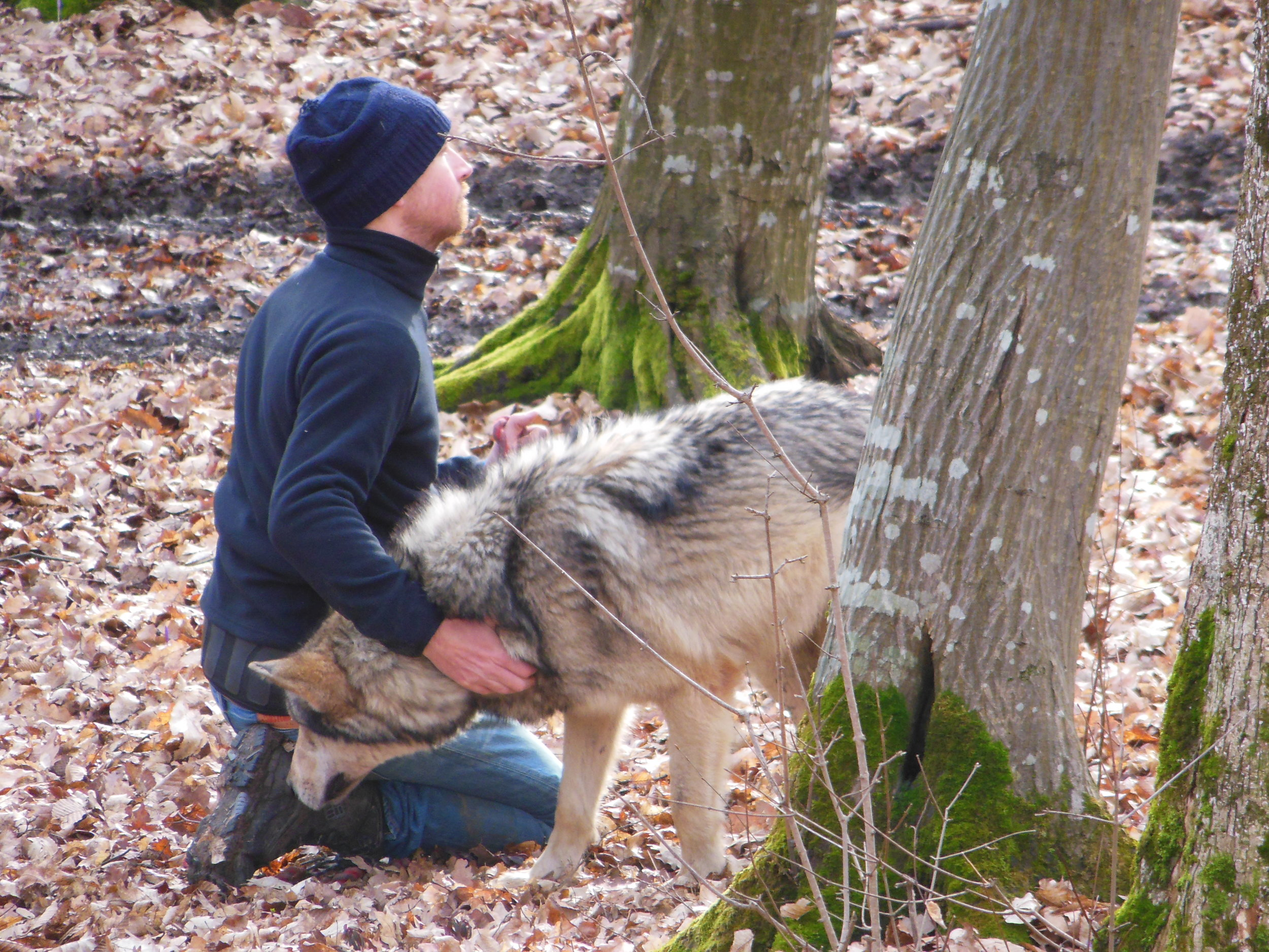 « Living with wolves » Romania