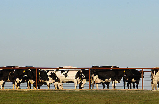 Dairy with Principles -