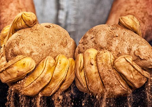Potatoes Grown in the Columbia River Basin -