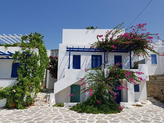 A classic house in Paros, Greece. No filter or editing needed! The pink flowers are so reminiscent of Greece for me, even my yiayia and pappou had them in their house in Australia.  #Paros #greece #greekislands #greece_travel #greek_islands #greeksummer #parosgreece #greekholidays #cyclades #cyclades_islands #islandlife #islandliving #greekpost #islandgetaway #summerfun #nomadlife #instatravel #instagood #notatourist #traveladdict #travelbug #travelgram #travelgreece #visitgreece #travelphotography #nofilter #travelblogger #cultureredux