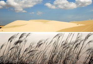 sand dune skyline & sea grass.jpg