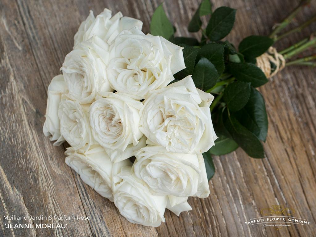 01 Rose Garden Jeanne Moreau.jpg