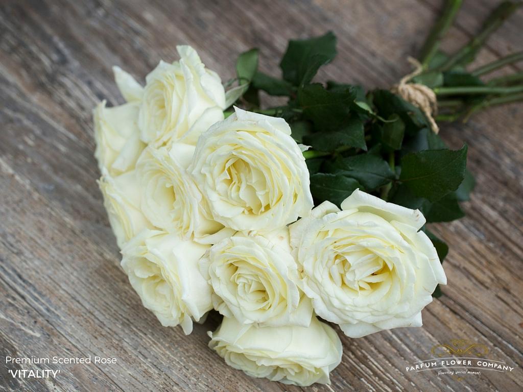 01 Rose Garden Vitality.jpg