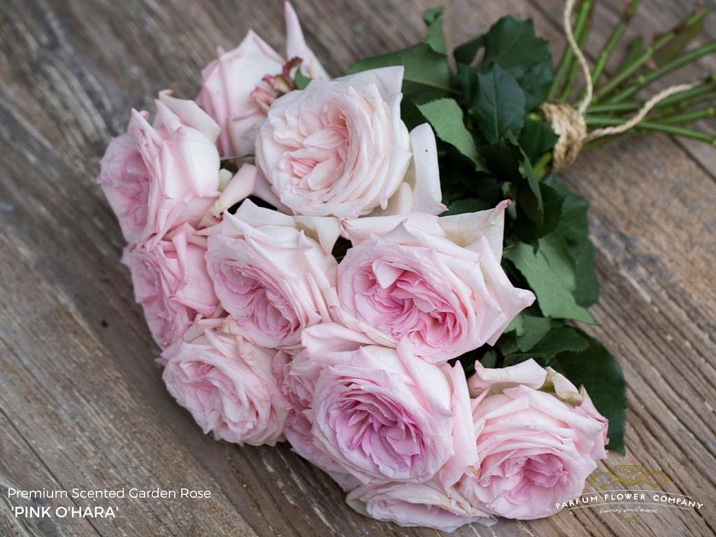 04 Rose Garden Pink Ohara.jpg