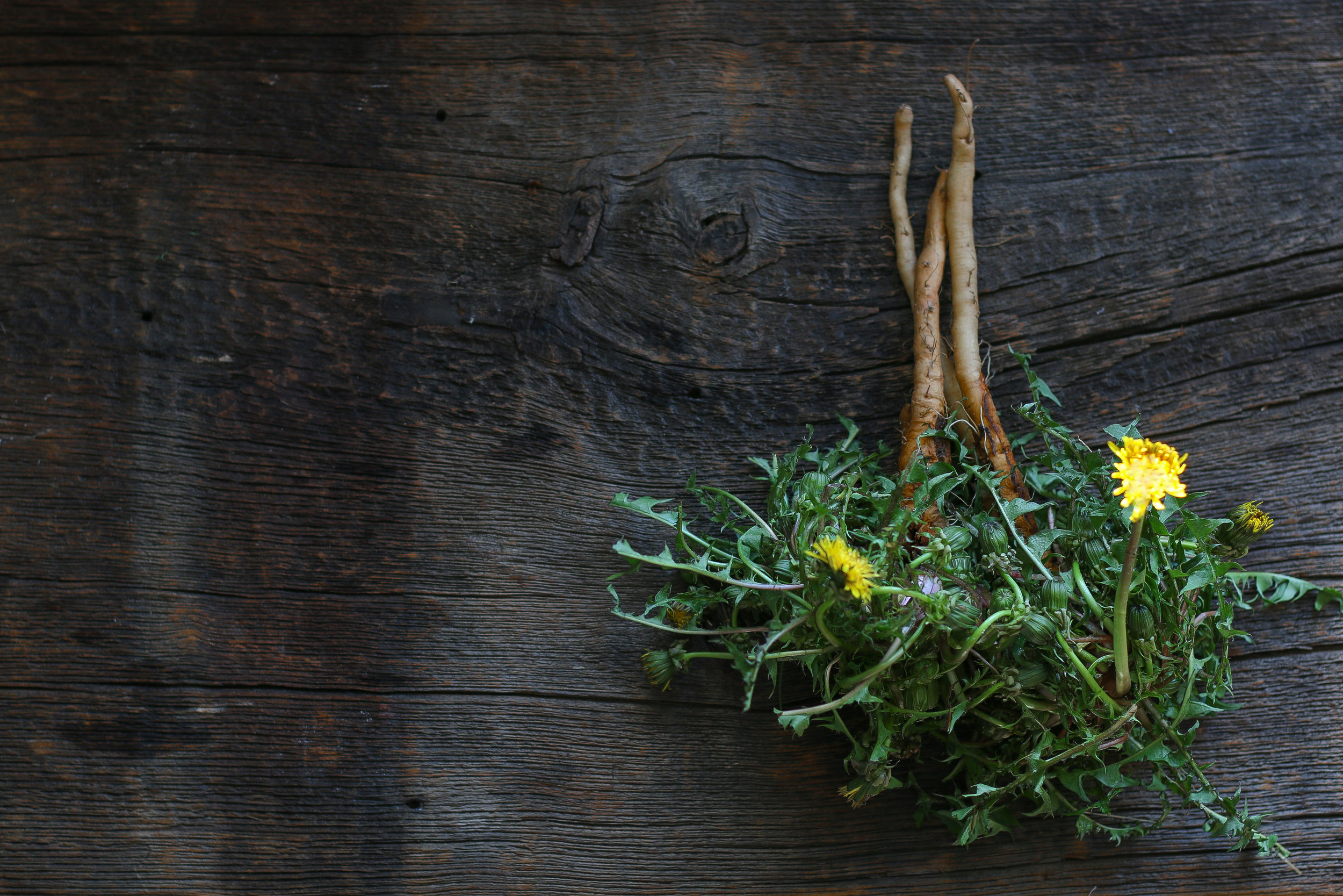 dandelion roots.jpg
