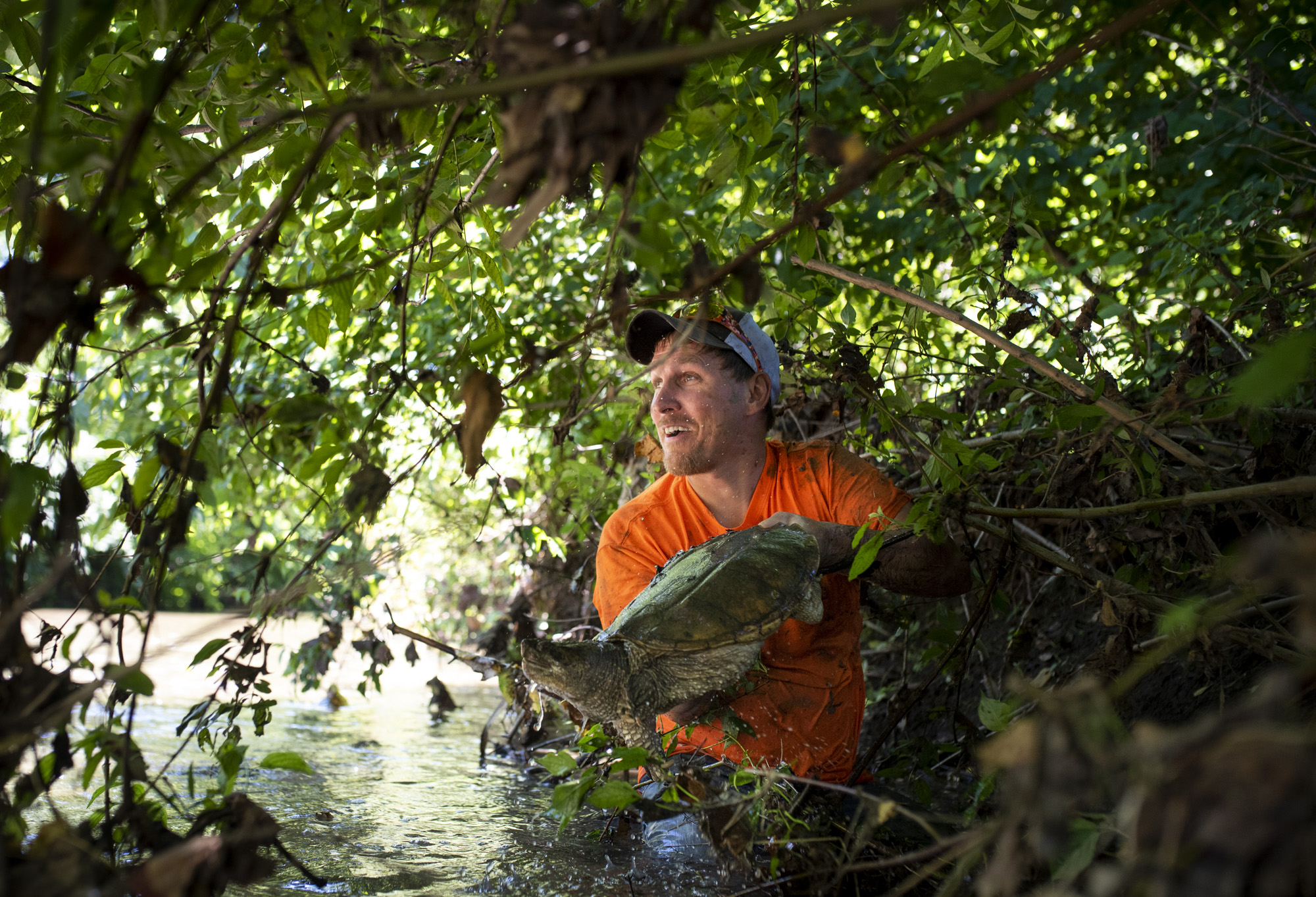 Joe Clemens pull out a snapping turtle from under the brush in Sewickley Creek.