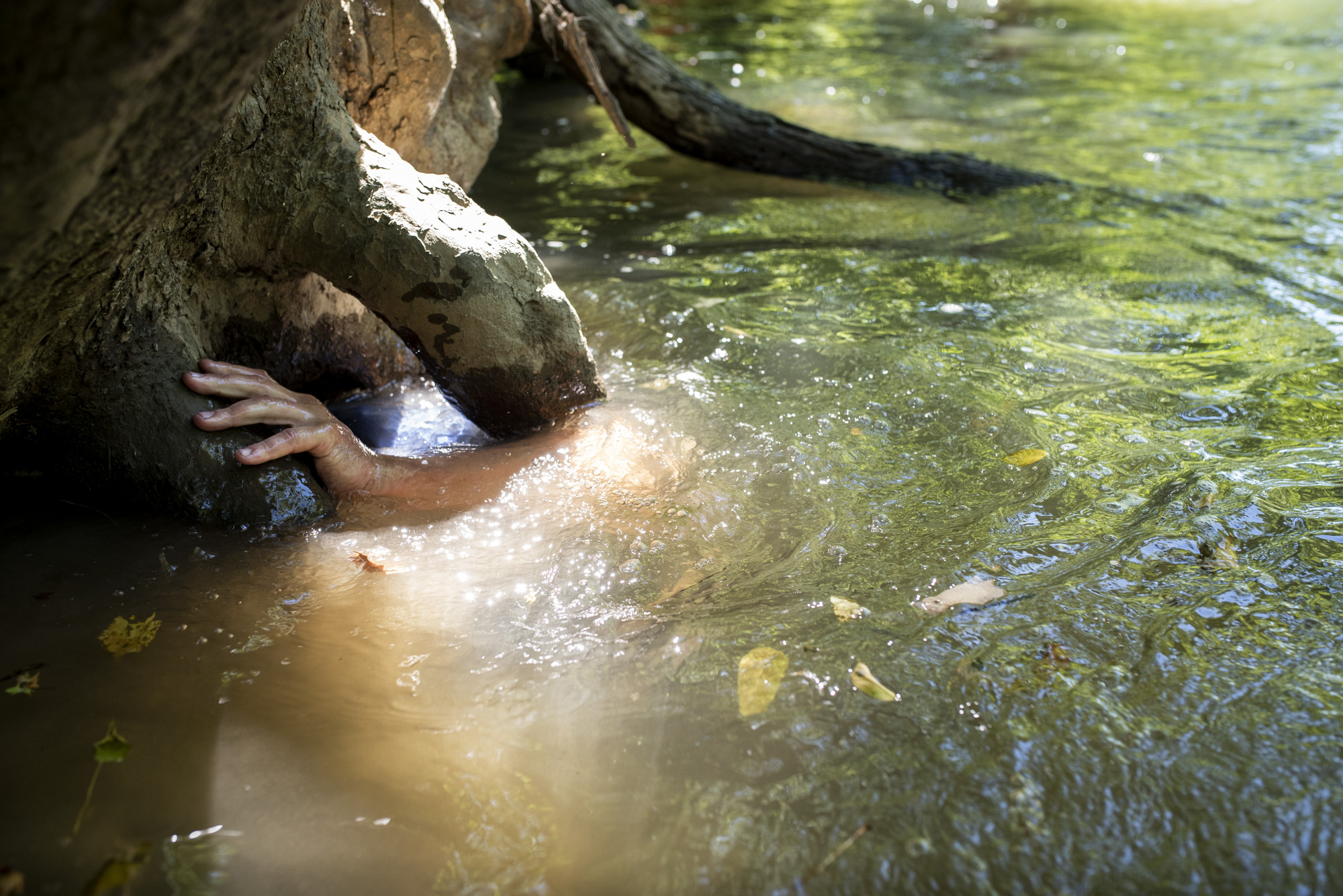 Joey Clemens grabs the roots of a tree he is searching under for snapping turtles.