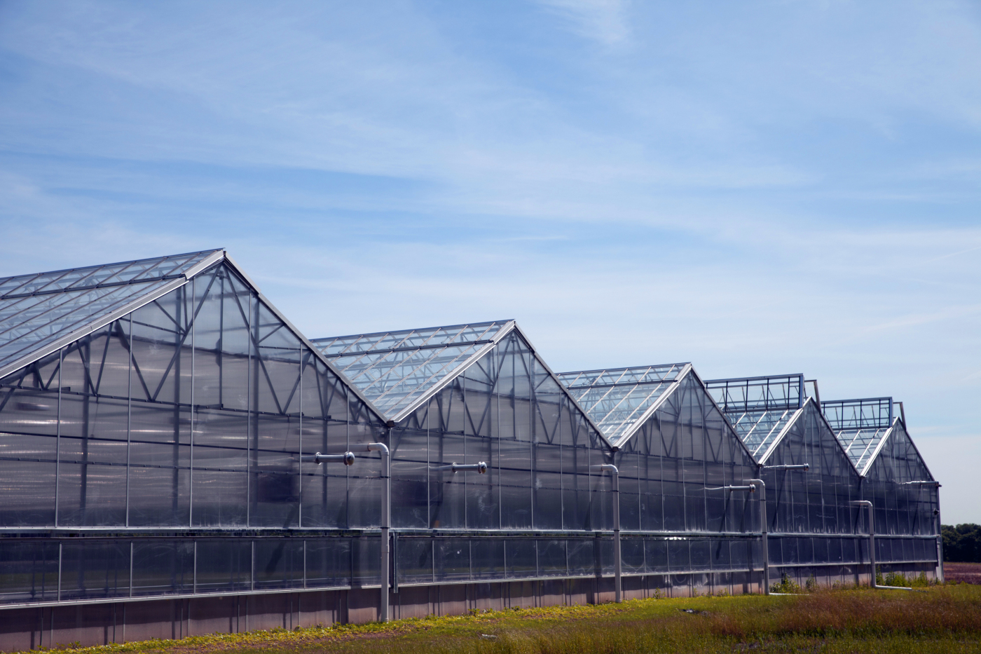 A BrightFarms greenhouse that grows tomatoes and salad greens.
