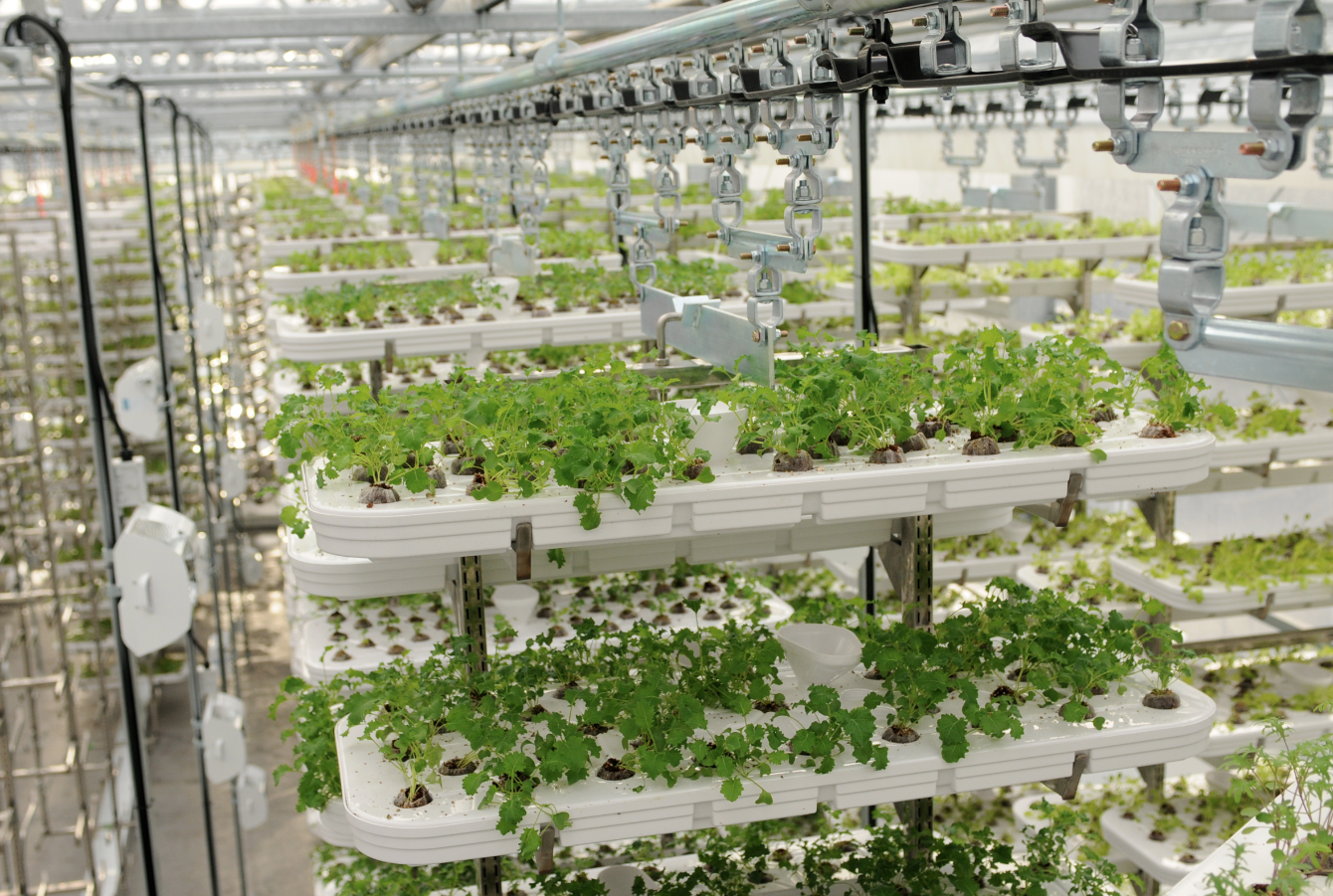 Alterrus' vertical farm on the top floor of a parkade at 535 Richards Street in 2012  | Dan Toulgoet, Vancouver Courier