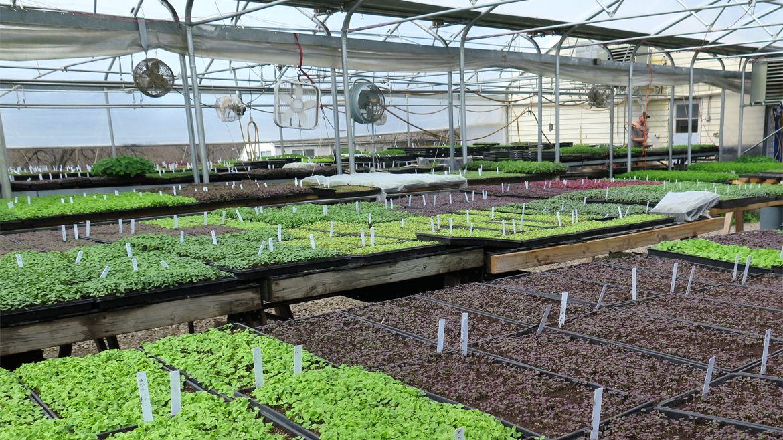 A look inside the greenhouse at City Bitty Farm. (Pete Dulin I Flatland)