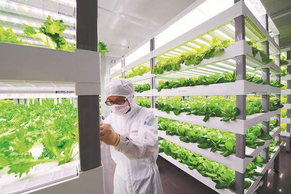 A laboratory worker in biohazard gear checks the growth of lettuce in the vertical farm in Anxi, Fujian province. ZHAN ZHUO / FOR CHINA DAILY