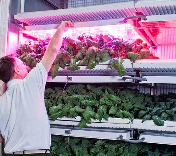 Famgro Farms is growing some microgreens and herbs, but kale is its bread-and-butter crop.