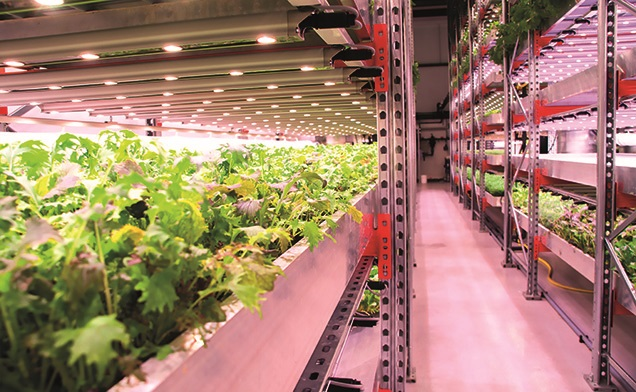 Indoor farming - a low-energy, low-water-use way of growing food - Source: Mandy Zammit