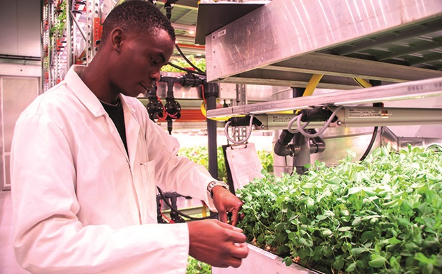 Indoor farming uses hydroponics, whereby plants are grown in a nutrient solution without soil - Source: Mandy Zammit